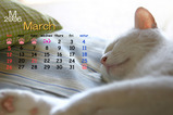 猫のカレンダー2006.03