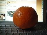 オレンジだと思う…