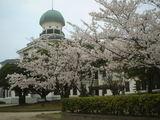 龍翔館と桜