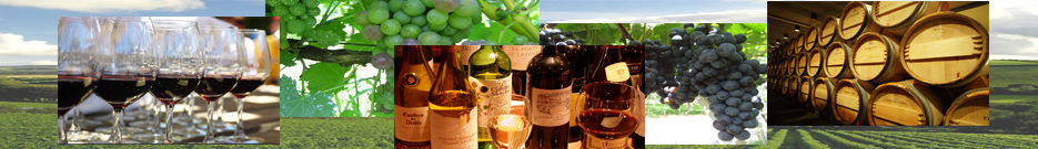 ワインを美味しく飲むコツをワインソムリエのMaiが教えちゃう