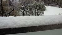 snow_120229_02