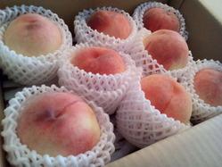 peach_140724