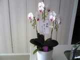 flower_100906