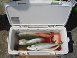 fishing_07_09_17