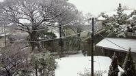 snow_120229_01
