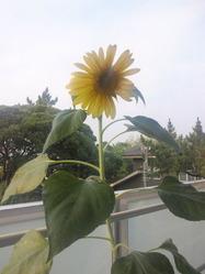 himawari_130711