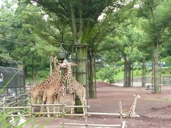 zoo_120623_02