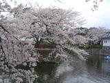 sakura_090405_01