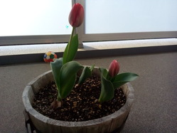 spring_140401_03
