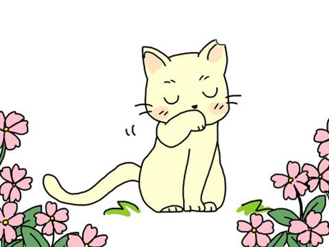耳カット猫2