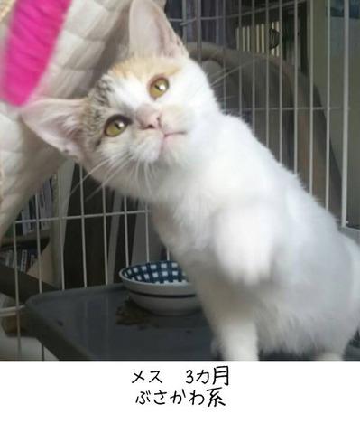 saitou02