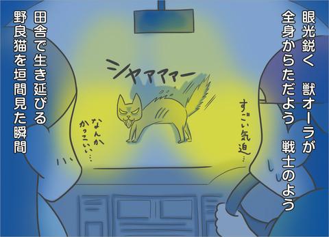 眼光鋭く獣オーラが全身から漂う紳士のような野良猫であった