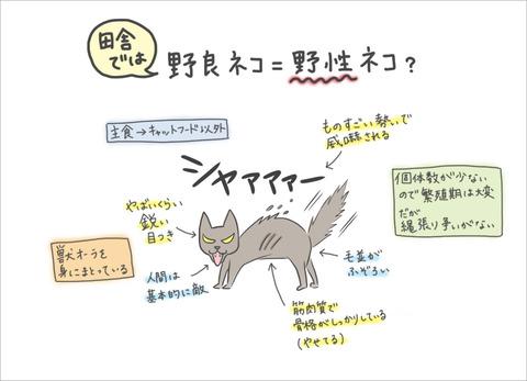 inaka-cat5