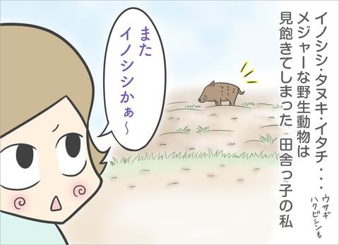 wild-animal1
