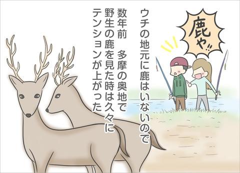 wild-animal4