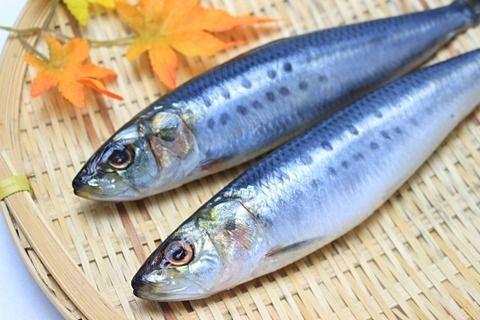【薄毛】漁師には薄毛の人が少ない その秘訣は魚 特にイワシは育毛効果が期待出来る
