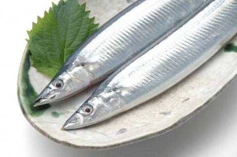 【悲報】ワイ秋刀魚好き、秋刀魚が高すぎて泣く