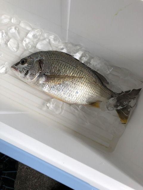 お魚食べるに詳しいJ民集え