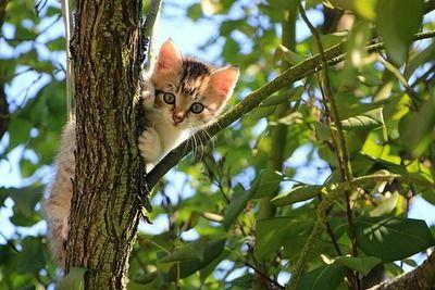 新しい猫を拾ってきたんだが前からいる猫がヤバくなってしまった