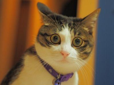 【画像】トンチキな姿勢でご飯を食べる猫がこちらwwww
