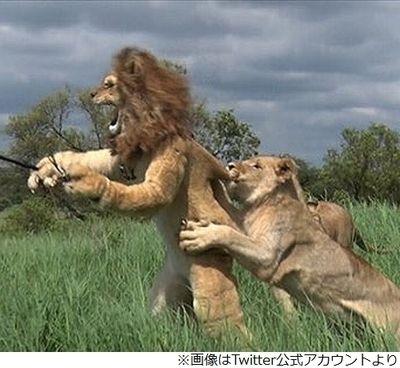 【悲報】狩野英孝、アフリカロケでライオンに噛まれるwwwwwwwwwww