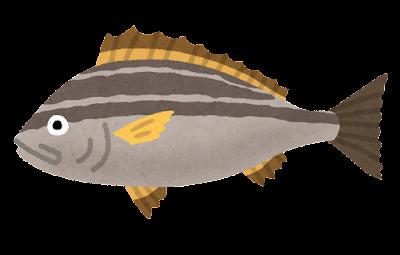 【画像】サビキ釣りしてきたんだがこの魚なにかわかる?