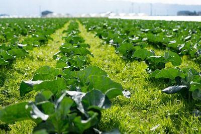 農家「値下がりが嫌やから取れすぎた野菜は轢き潰したろ!」←これ