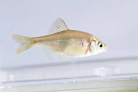 用水路でタナゴとかの小魚を釣ってたら怪しまれるかな?