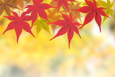 【悲報】秋、死ぬ