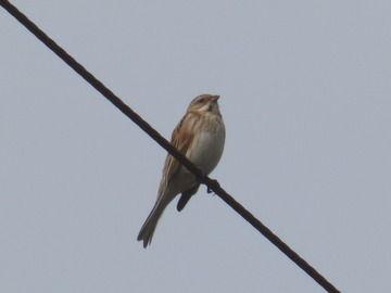 【謎】なぜ電線に止まった鳥たちは感電して焼鳥にならないのか?