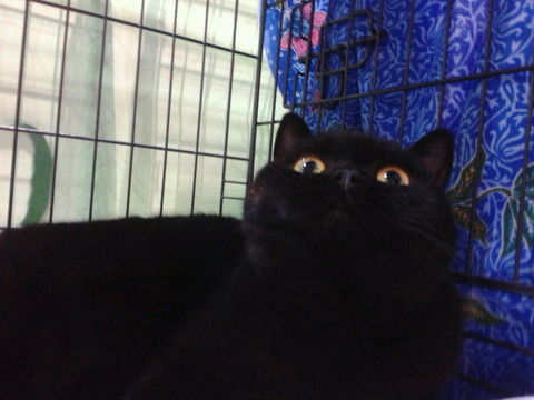 【画像】猫が飼えないワイのために愛猫自慢していけよ