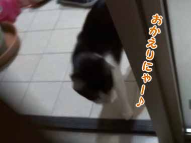 ネコ好きなパパが帰宅した。玄関で猫と息子が「お出迎え」してくれる。至福の時→と思ったら…