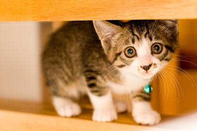 【悲報】ワイ、猫に寝場所を奪われてしまう…