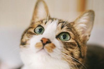 FPSのガチクラン入ってるんだが猫のせいでミスしたら猫捨てるかクラン抜けるかの選択を迫られてる