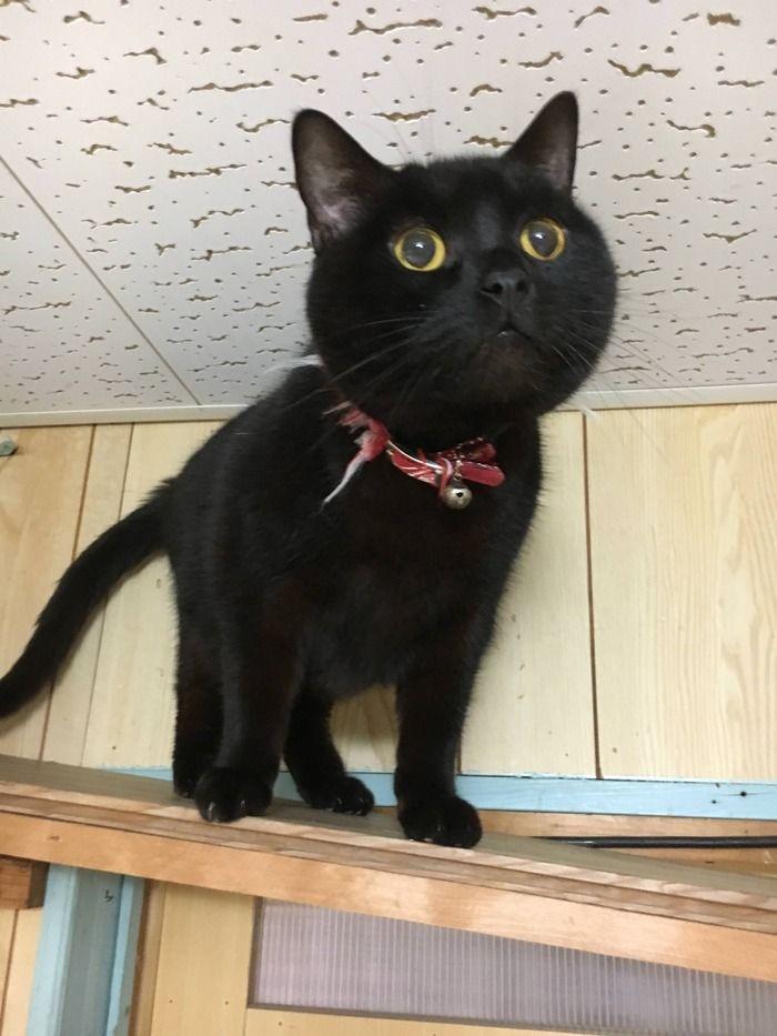 【黒猫他】うちのネッコ可愛いすぎぃ....