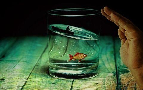 【狂気】ぼっち高校生俺氏、金魚と話せるようになった結果wwwww