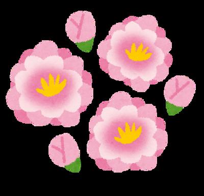この花の名前教えてくれ