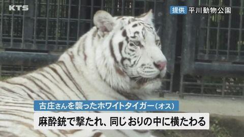 平川動物公園事故、飼育員を殺害したトラの現在…まじかよこれ…