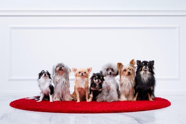 【速報】宇宙一可愛い犬、決まる !!!
