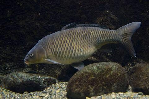 食える魚がいるわけでもない川で釣竿2本固定して離れたとこでまったりしてるおっさんがいるんだがなにがしたいの?