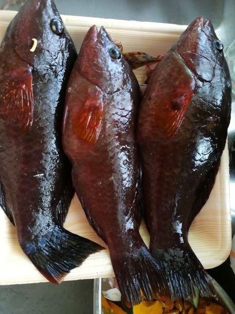 【画像】魚を釣ったのですが食べれますか