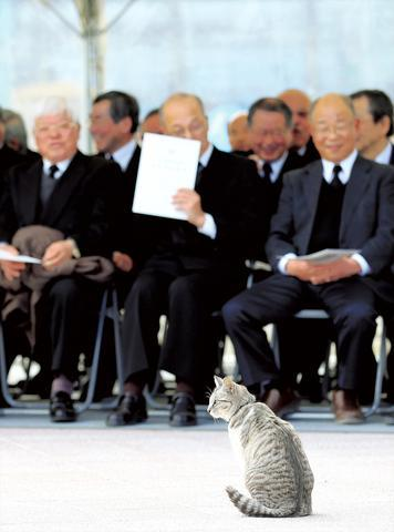 厳粛な会場にネコ一匹