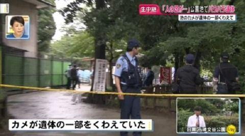 目黒の碑文谷公園内の池のカメがくわえていたものは「バラバラの人の遺体」 東京・目黒区の公園で発見。ネットの反応がヤバい
