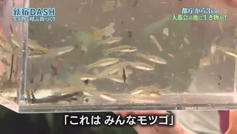 鉄腕DASH すっぽんと刀 (645)