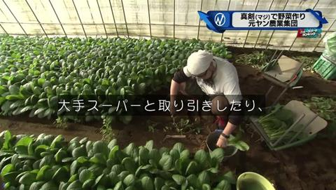 新・情報7days 元ヤンキー 農家 (35)