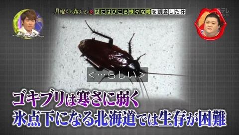 北海道 ゴキブリ 平気 感動 (20)