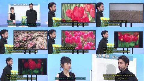「植物に学ぶ生存戦略2」チューリップ