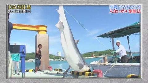 鉄腕DASH サメが出現 (677)