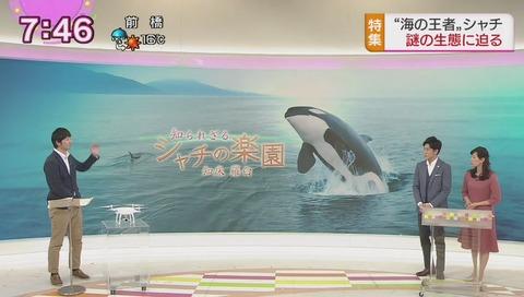 シャチの楽園