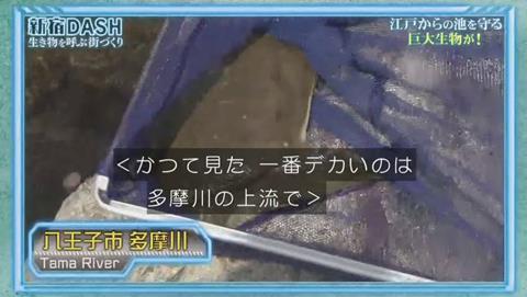 鉄腕DASH すっぽんと刀 (784)